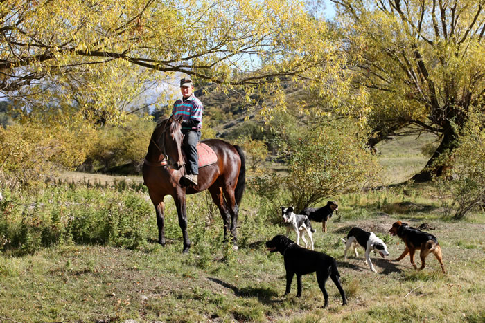 Working on horseback with the dogs