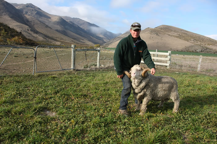Richard and a Merino ram